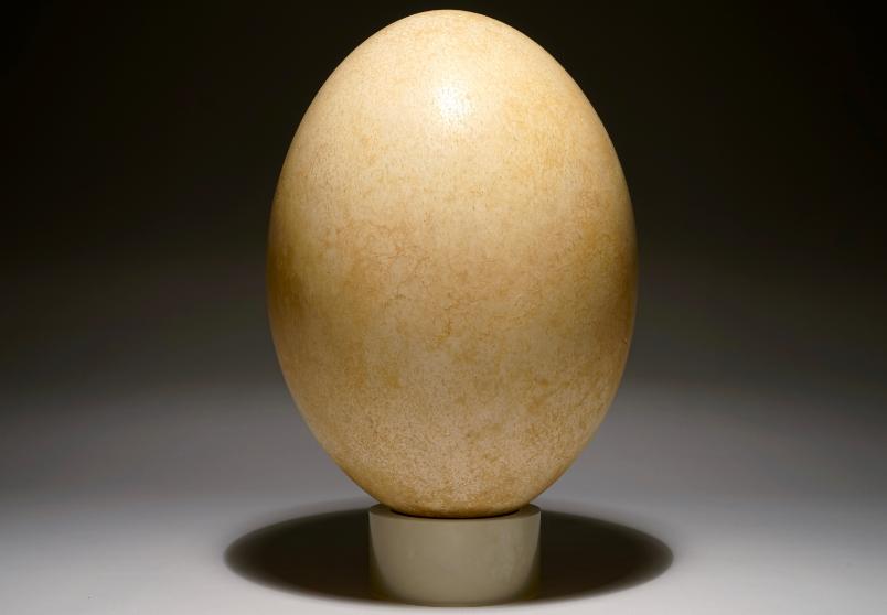An egg of a elephant-bird, Aepyornis maximus, Madagascar, 17th century or earlier