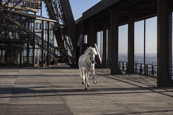 Paola Pivi, Yee-Haw (Horse) (2015) Photo: Courtesy Galerie Perrotin via Design Boom