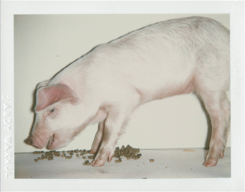 Andy Warhol Fiesta Pig Christie's Online Only
