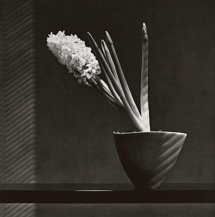 Robert Mapplethorpe Hyacinth, 1987 Lempertz