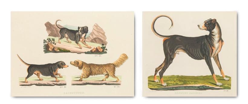 THEODOR GÖTZ (Hg.) Hunde-Gallerie oder naturgetreue Darstellung des Hundes in drei und vierzig reinen unvermischten Racen, mit einer kurzen Einleitung und Beschreibung jeder Race, 32 Aquatintatafeln, Weimar 1838