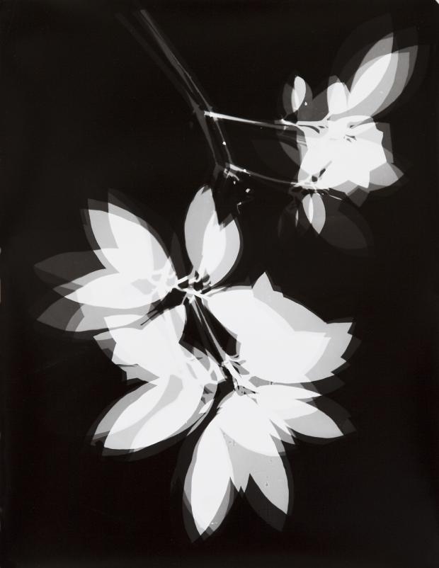 © Henri Foucault Vibrations - Giverny, 7 novembre 2012