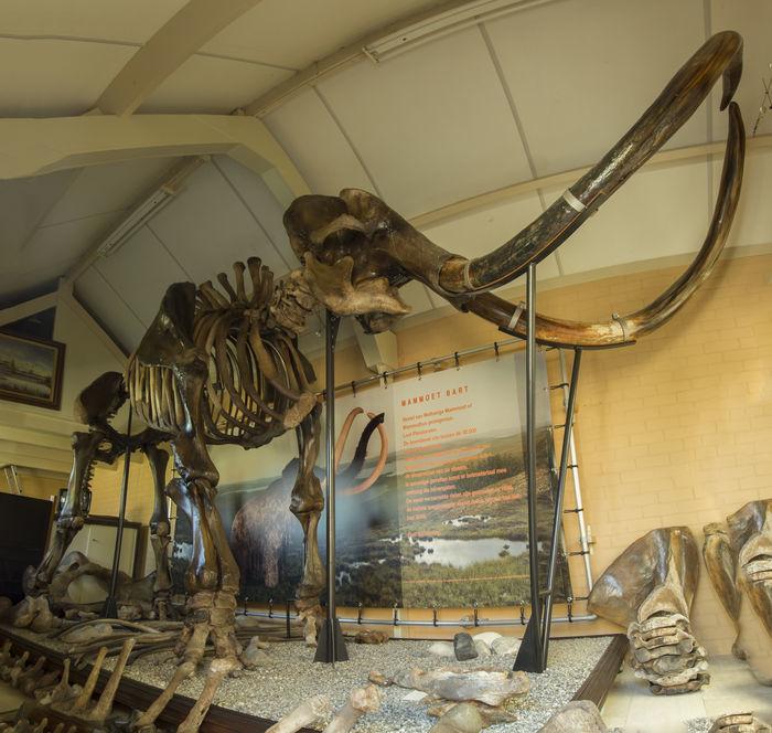 Esqueleto completo de mamut (Mammuts primigenius) que se encontró en el Mar del Norte. Tiene entre 30.000 y 50.000 años antigüedad. Precio estimado: entre 200.000 y 260.000 €