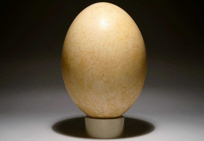 An egg of a bird-elephant, Aepyornis maximus, Madagascar, 17th century or earlier