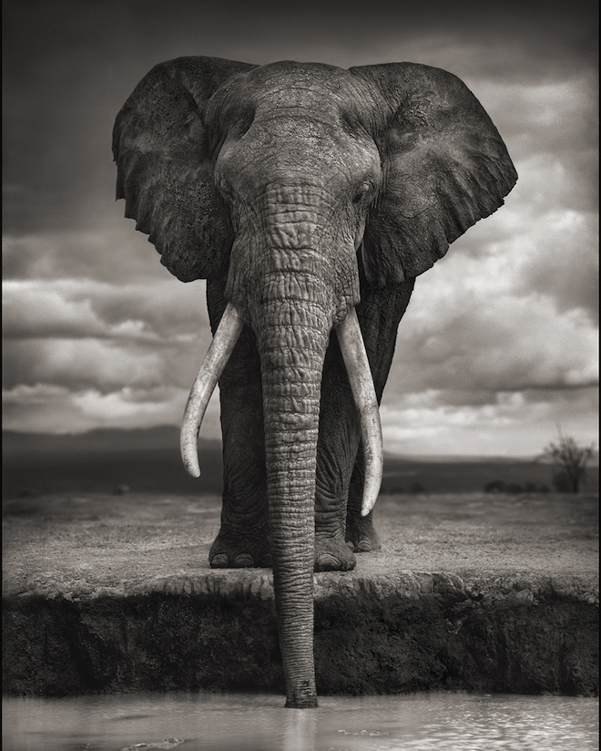 """Nick Brandt, """"On This Earth A Shadow Falls Across The Ravaged Land"""" 2015"""