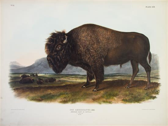 """AUDUBON, JOHN JAMES, AND JOHN BACHMAN The Viviparous Quadrupeds of North America. New York: J.J. Audubon, 1845-1848. 3 vols. Elephant folios, contemporary 3/4 black morocco over cloth, gilt-lettered spines. The present, rare, three-volume edition, with all of its title pages, is in very good condition, unrestored, with brilliant coloring. First edition of """"the largest successful color plate book project of 19th-century America,"""" (Reese) complete, with 150 hand-colored lithographed plates by J.J. Audubon and J.W. Audubon, backgrounds by Victor Audubon, lithography by J.T. Bowen, three lithographed title pages, and leaves of contents. Early issue, bound in three volumes. The later editions were bound in two volumes, with inferior coloring, and without the title-page for volume three."""