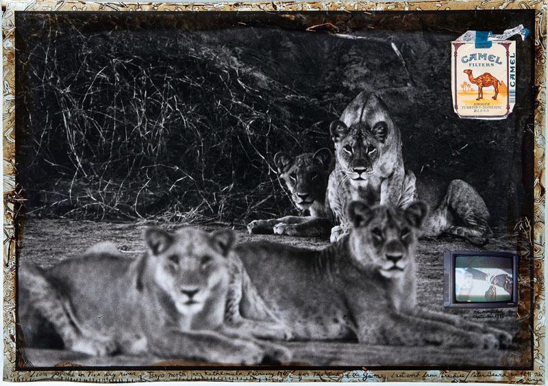 PETER BEARD (*1938 New York City) - Lion Pride in Tiva Dry River, Silbergelatineabzug, Collage, Tinte, Blut, Pflanzenteile, Zigarettenschachtel, Foto, bezeichnet und signiert, 1965/nach 1996, Unikat