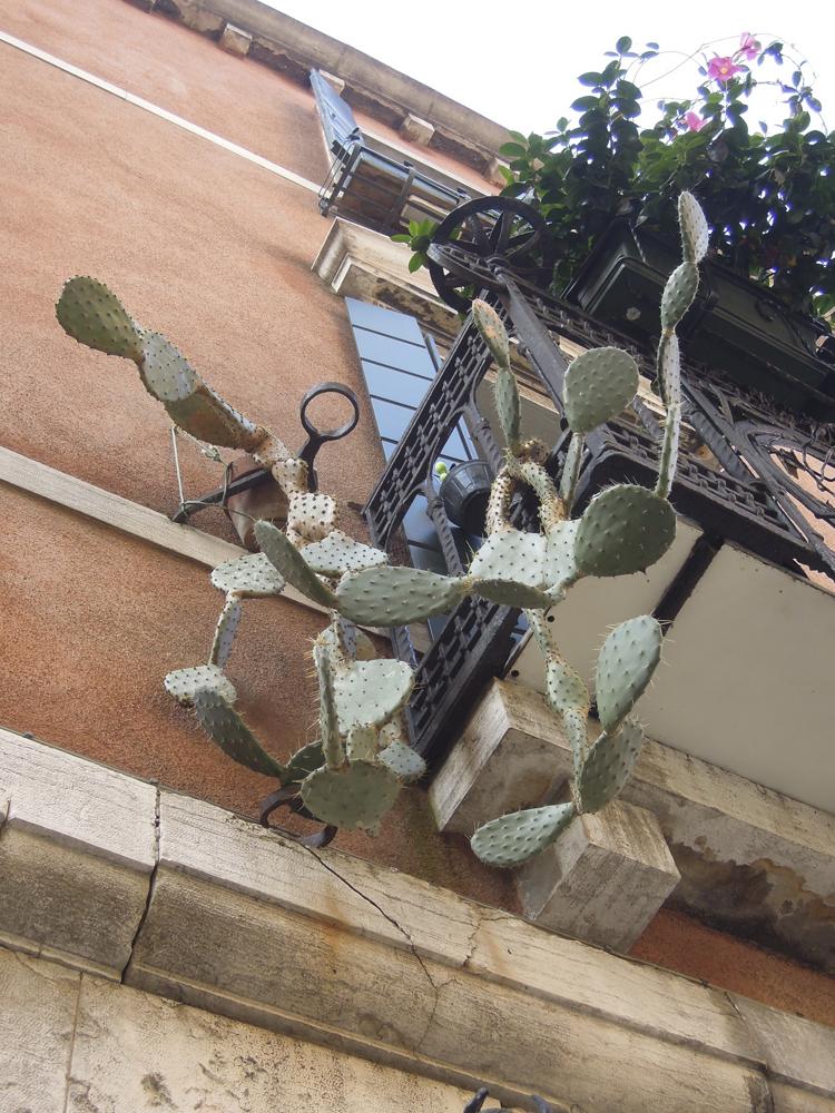 Kakteer på balkong.