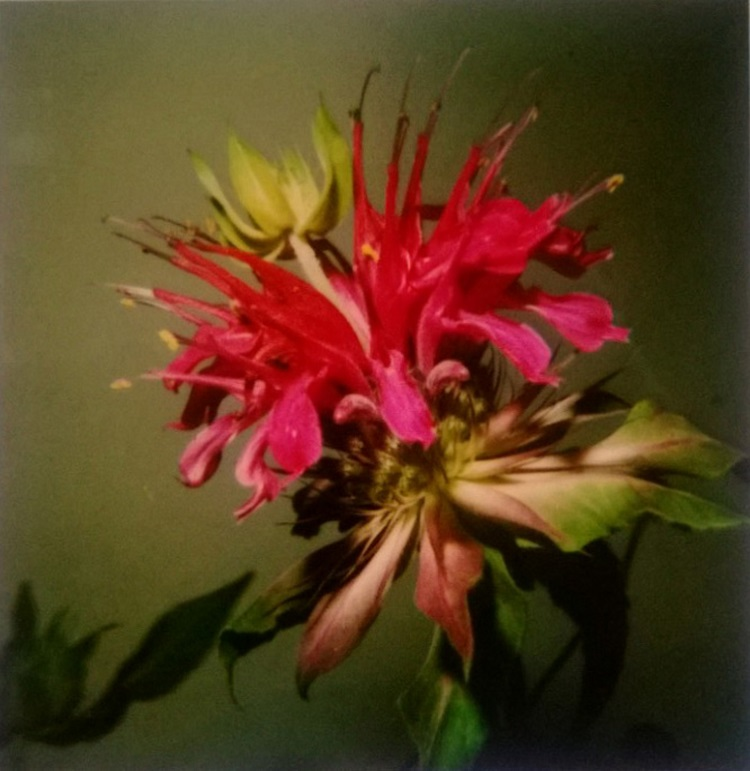 nobuyoshi-araki-untitled-flower-photographs-polaroid-zoom