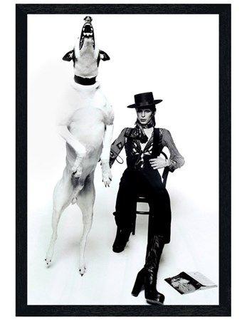 """Fotografie """"Diamond Dog"""" von Terry O'Neil mit zwei weiteren Sammlerobjekten"""