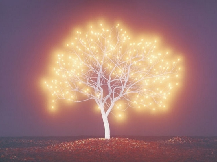 lee-jeonglok-tree-of-life-1-2-photographs-chromogenic-print-c-print-zoom