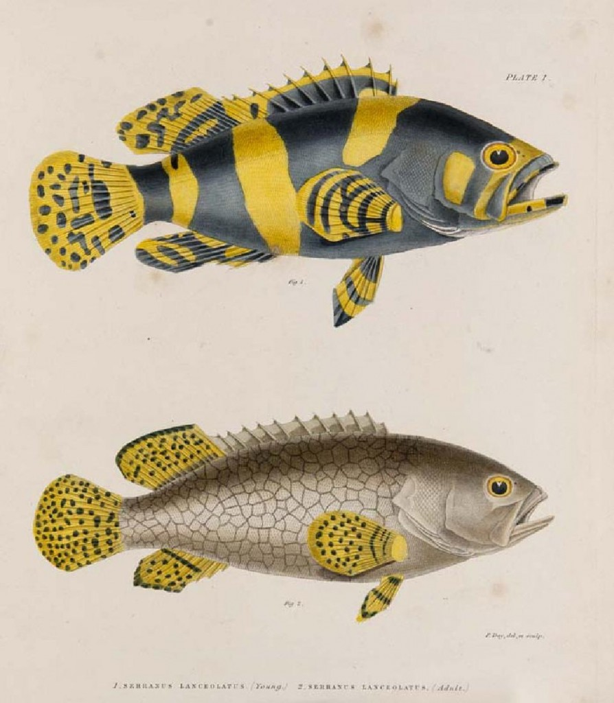 Francis Day - The Fishes of Malabar, London, Bernhard Quaritch, 1865