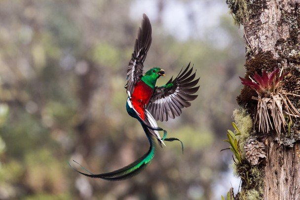 A quetzal Image via National Geographic