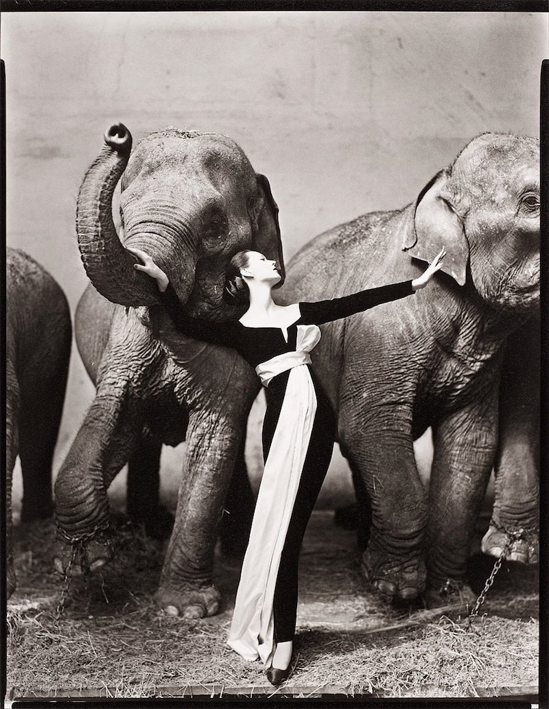 "Richard Avedon, ""Dovima with elephants, evening dress by Dior, Cirque d´Hiver, August 1955"". Foto: Bukowskis"