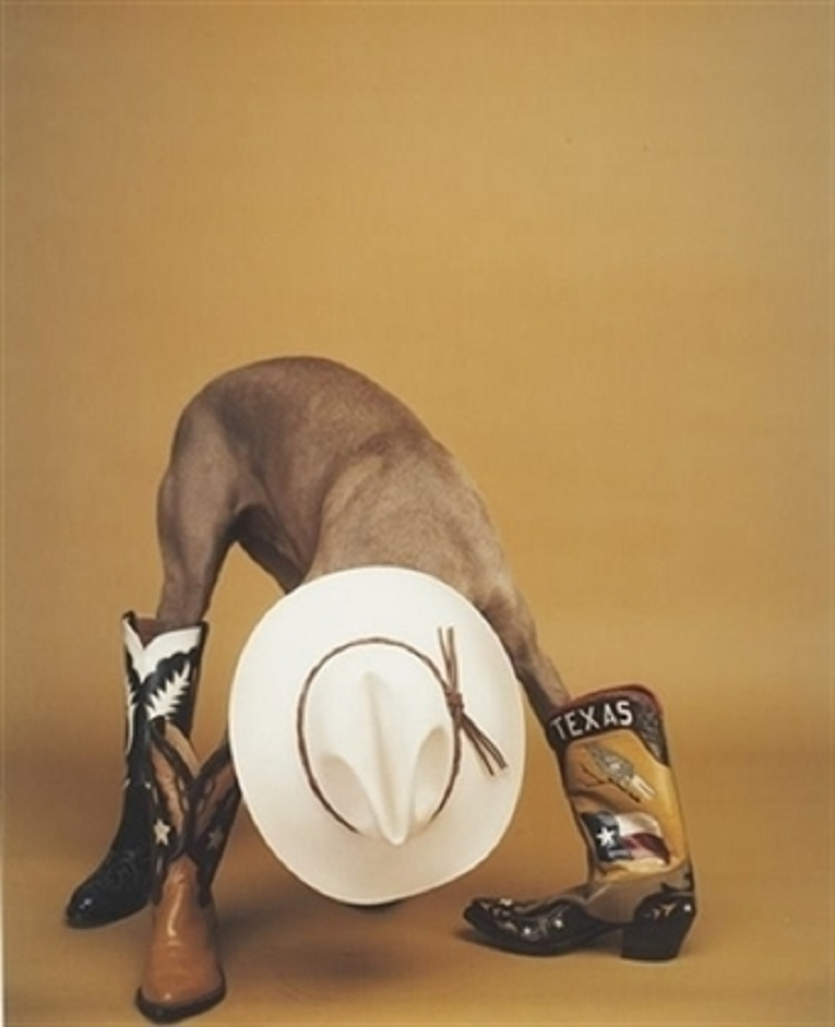 william-wegman-altered-state-photographs-polaroid
