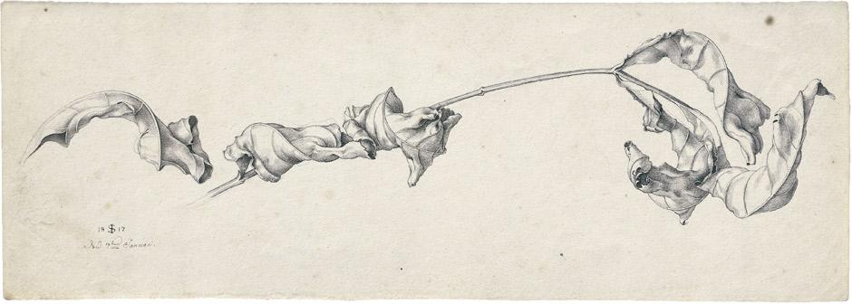 JULIUS SCHNORR VON CAROLSFELD (1794-1872) - Ein Zweig mit welken Blättern, Feder in Graubraun über Bleistift auf Velin, 9,1 x 25,6 cm, monogrammiert und datiert, 1817 Schätzpreis: 450.000 EUR