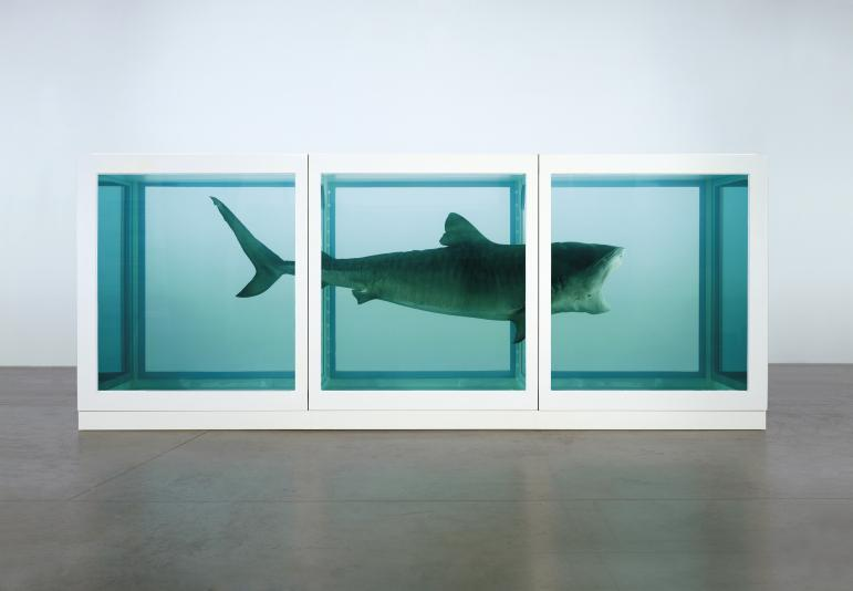 Damien Hirst, The Physical Impossibility of Death in the Mind of Someone Living , 1991.