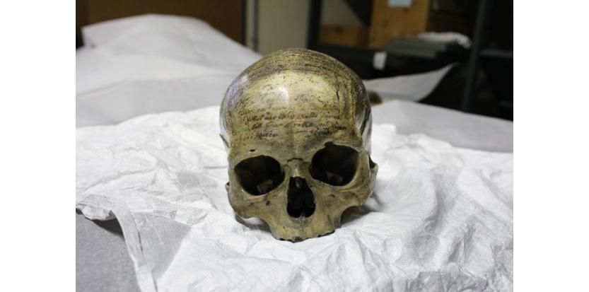 Le crâne du philosophe et scientifiques français René Descartes est présenté dans le département d'antrophologie du Musée de l'Homme Image via AFP