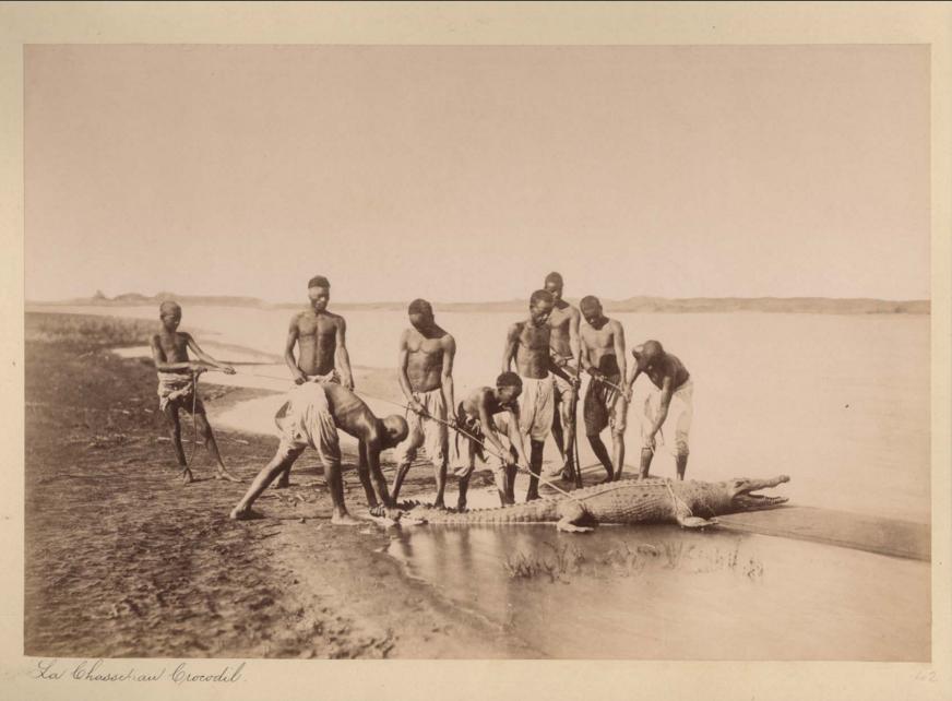La Chasse Au Crocodile Afrique, vers 1880 Shapero Rare Books