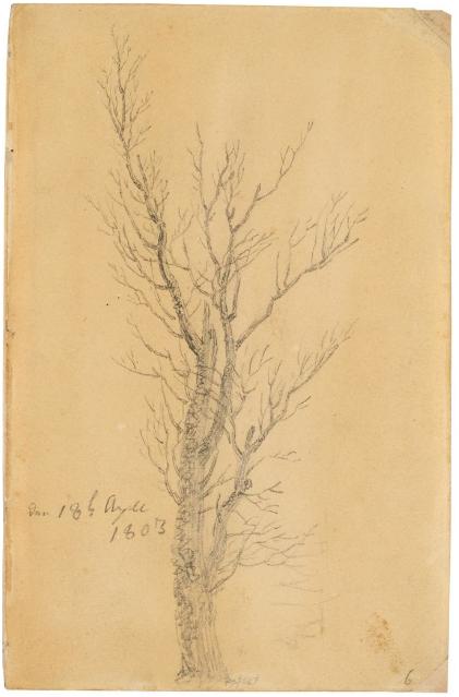 Caspar David Friedrich Étude d'arbre, crayon