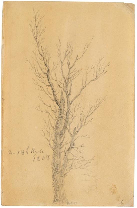 Caspar David Friedrich (1774 -1840) - Trädstudie. penna mot ljusbrun pergament, daterad april 18, 1803.