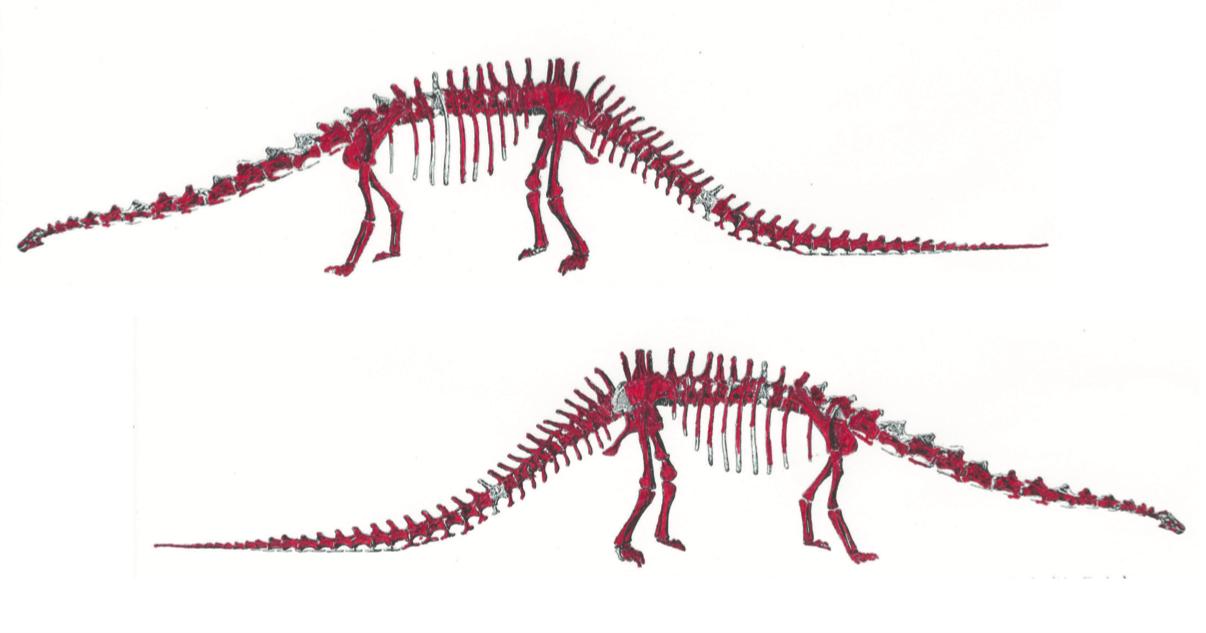 Cartes ostéologiques des deux profils de SKINNY présentant en rouge les os authentiques, image © Aguttes