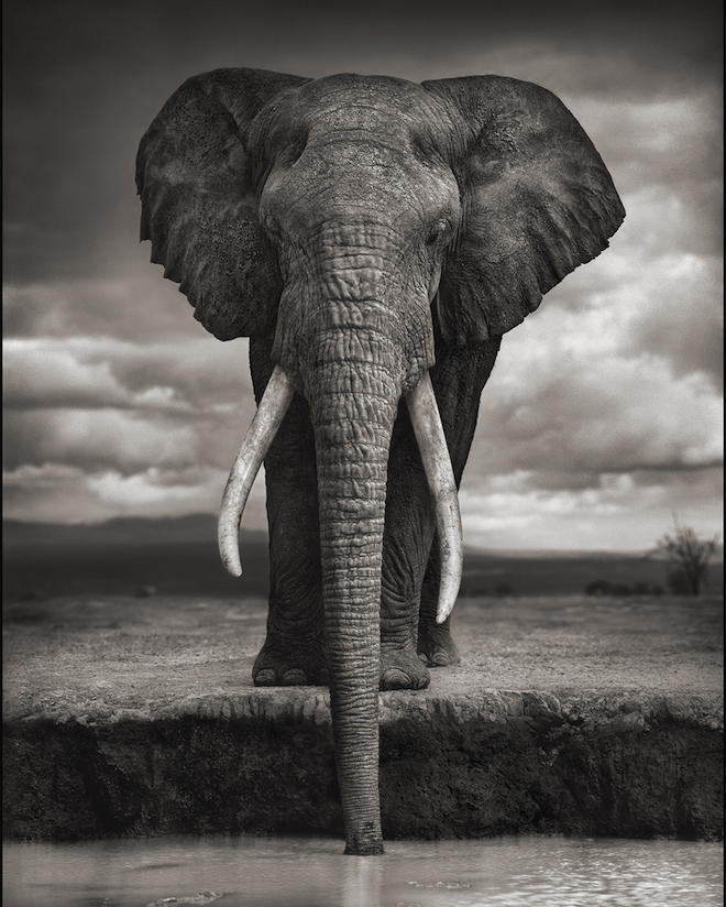 "Nick Brandt, ""On This Earth A Shadow Falls Across The Ravaged Land"" 2015"