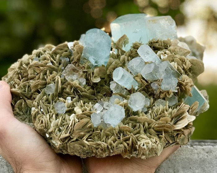 Aesthetic Gemmy Aquamarine Crystals Bunch with Fluorite and Muscovite Mica
