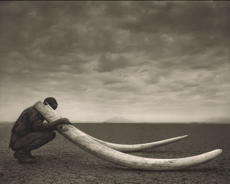 Nick Brandt 'Ranger with tusks of killed elephant, Amboseli', 2011 Sotheby's