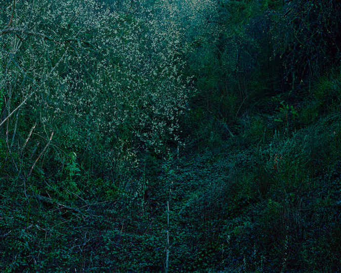 Trees.tif
