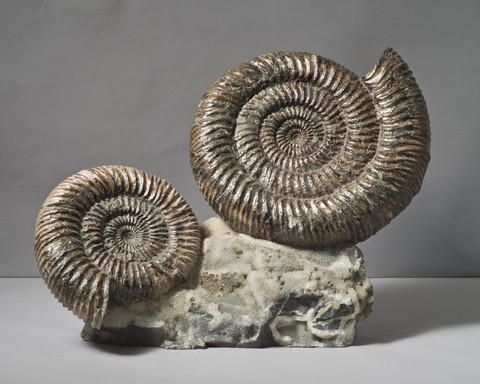 Pair of Russian Ammonites