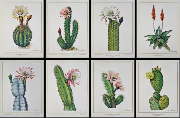 « Les Fleurs des plantes Grasses » – Lot de 9 albums rassemblant 8 planches lithographiques, illustrant les plantes grasses du Jardin Exotique de Monaco Accademia Fine Art