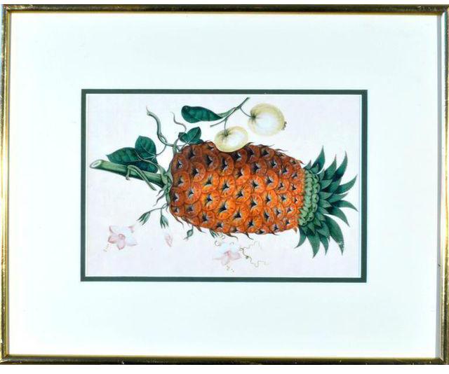 Aquarelles de China Trade représentant divers fruits exotiques dont l'ananas DECASO
